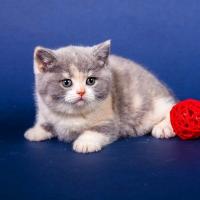 Фосессии животных, фотосъемка кошек, котов, котят, съемка собак и щенков1