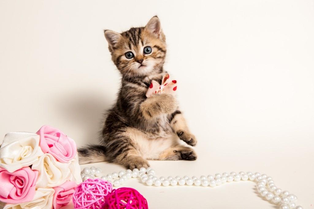 Фотосессия котенка