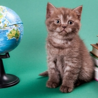 Фотосессии животных, фотосъемка кошек, котов, котят, съемка собак и щенков